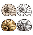 cartoon and outline sea shells vector image vector image