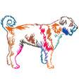 colorful decorative standing portrait lagotto vector image