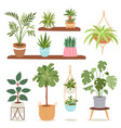 house indoor plants and nature flowers interior vector image vector image