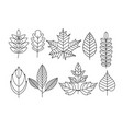 set of doodle leaves in line vector image