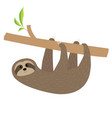 sloth hanging on tree branch fluffy fur cute vector image vector image