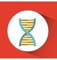 dna molecule design vector image