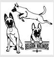 belgian malinois dog - set isolated vector image vector image