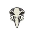 Eagle Skull Retro vector image