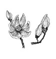 ink pencil leaves and flowers magnolia vector image vector image