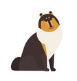 rough collie adorable herding or pastoral dog vector image vector image