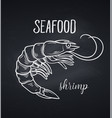 hand drawn shrimp vector image
