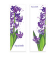 hyacinth banner vector image vector image