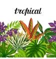 Seamless horizontal border with tropical plants vector image