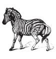 zebra vintage vector image vector image