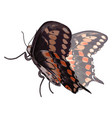 3d butterfly with details on white background vector image vector image