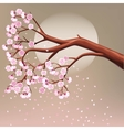 Blooming cherry tree branch vector image
