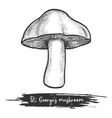 st george s mushroom sketch vector image vector image