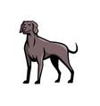 weimaraner dog breed mascot vector image vector image