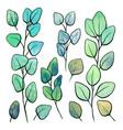 botanical watercolor eucalyptus populus set of vector image vector image