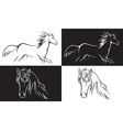horse on white and black background vector image vector image
