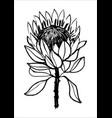 ink hand drawn protea flower black vector image vector image