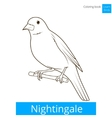 nightingale learn birds coloring book vector image vector image