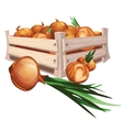 Onion harvest in wooden box vector image