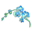 the watercolor of blue orchid vector image