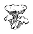 oyster tree mushroom engraving vector image vector image