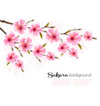 spring background with sakura japan cherry branch vector image vector image