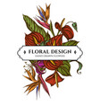 floral bouquet design with colored gloriosa vector image vector image