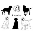 labrador set collection pedigree dogs black vector image
