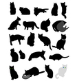 silhouette cats vector image vector image