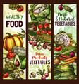 vegetables and veggie sketch banners vector image vector image