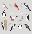 elements set cute winter birds isolated vector image vector image