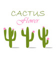 cactuses with flowers vector image