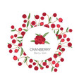 circular label or tag template with cranberries vector image vector image