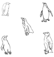 Penguins A sketch by hand Pencil drawing vector image vector image