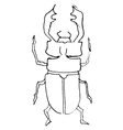 stag-beetle vector image vector image