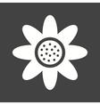 Daisy vector image vector image