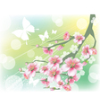 flowering branch vector image vector image