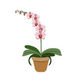 object pink orchid in flower pot vector image