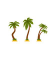 palm tree as tropical plant with trunk rested on vector image