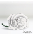 White Rose flower on background vector image vector image