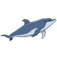 color image a dolphin vector image