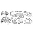 crocodile and turtle reptiles and amphibians set vector image vector image