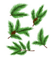 fir branches set of vector image