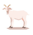 flat geometric goat vector image vector image