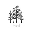 Hand drawn with wild forest vector image vector image