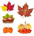 Vintage Autumn Set vector image vector image