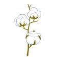 cotton brunch vector image vector image