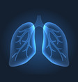 human lungs bronchi anatomy structure vector image