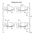 Hyaluronic acid vector image vector image