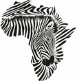 map africa made zebra head and skin vector image vector image